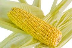 Raw Corn Royalty Free Stock Photo