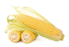 Corn cobs on white background. Royalty Free Stock Photos