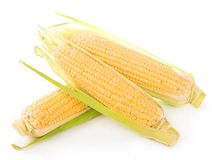 Corn cobs on white background. Royalty Free Stock Images