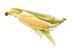 Raw corn isolated stock photography
