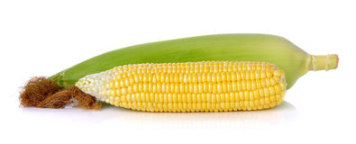 Raw corn isolated on the white background Royalty Free Stock Photo