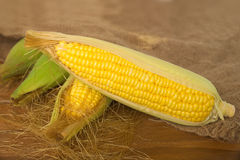 Raw corn pour out of grunge sack Royalty Free Stock Photography