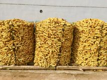 Raw corn stacks Royalty Free Stock Photos