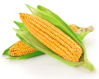 Raw corn vegetable Stock Images