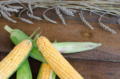 Raw corn on wood table. With wheat Royalty Free Stock Photography