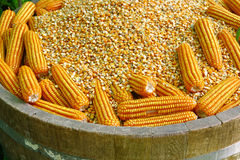 Raw corn in wood tank Royalty Free Stock Photos