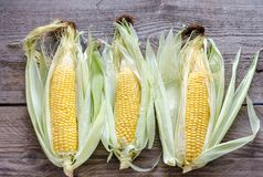 Raw corn on the wooden board Stock Photography
