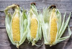 Raw corn on the wooden board Stock Photo