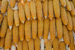 Raw corns Royalty Free Stock Images