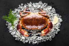 Raw crab on ice on a black stone table. Top view Stock Photo