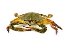 Raw crab Royalty Free Stock Photo