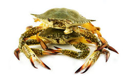 Raw crab Stock Image