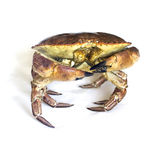 Raw crab isolated on a white. Stock Photo