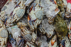 The raw crab in a local market. Sea food Royalty Free Stock Photo