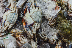 The raw crab in a local market. Sea food Royalty Free Stock Image