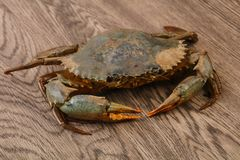 Raw crab. Over the wooden background ready for cooking Royalty Free Stock Images