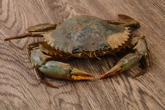 Raw crab. Over the wooden background ready for cooking Stock Photo