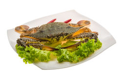 Raw crab Stock Image
