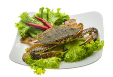 Raw crab. Ready for cooking Royalty Free Stock Image