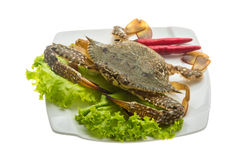 Raw crab Royalty Free Stock Photos