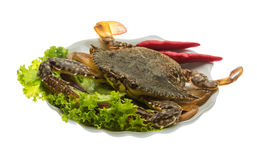 Raw crab Royalty Free Stock Images