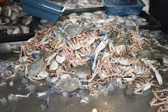 Raw crab for sale at fishermans fresh market Royalty Free Stock Photo
