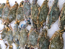 Raw of crab at sea food in supermarket in Thailand. Raw of crab at sea food at sea food department in supermarket in Thailand Stock Photos