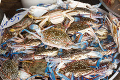 Raw crab at seafood market Royalty Free Stock Photos