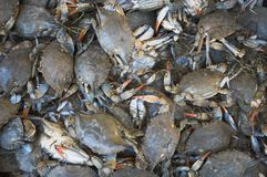 Raw crabs Royalty Free Stock Photo