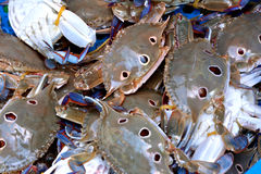 Raw crabs Stock Images