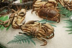Raw crabs on ice at a market. In Spain Royalty Free Stock Images