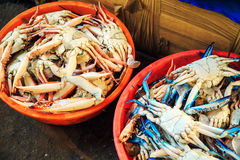 Raw crabs in the pelvis. The fish market in South India Stock Images