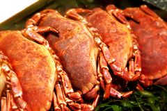 Raw crabs in shop Stock Images