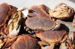 Raw crabs. Sold in a fish market Royalty Free Stock Photo