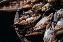 Raw crad sea food at local market in asia Royalty Free Stock Images