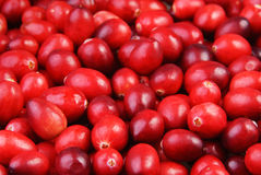 Raw Cranberries background. Red Raw Cranberries background. Selective focus Stock Photography