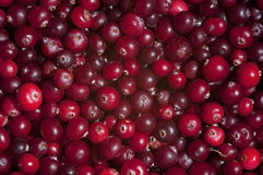 Raw cranberries, texture, background, still life. Raw wild cranberries, texture, horizontal background, top view Royalty Free Stock Photo