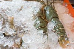 Raw crawfishes on ice Stock Photography