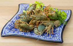 Raw Crayfish Stock Image