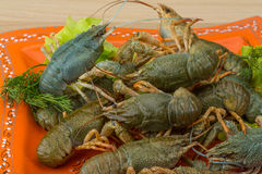Raw Crayfish Royalty Free Stock Photography