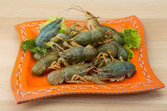 Raw Crayfish Royalty Free Stock Images