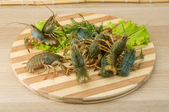 Raw Crayfish Stock Photos
