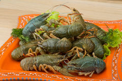 Raw Crayfish Stock Images