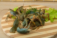 Raw Crayfish Stock Photography