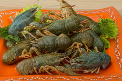 Raw Crayfish Stock Photo