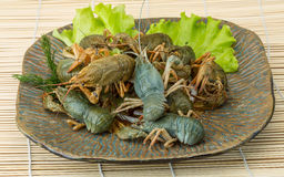 Raw Crayfish Royalty Free Stock Image