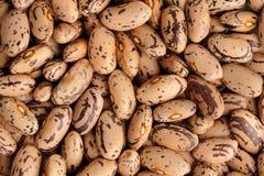 Raw creamy pinto beans pattern Stock Photo