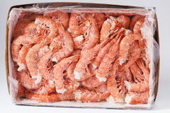 Raw crevette. Fresh frozen shrimp in box. Name `Gambero Argentino Stock Photos
