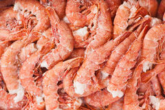 Raw crevette. Fresh frozen shrimp in box. Name `Gambero Argentino`. Closeup Stock Photography