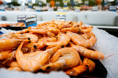 Raw crevettes at market stall counter. Supermarket stall with raw crevettes - fresh fish counter full with diverse - organic fish meat Royalty Free Stock Photos